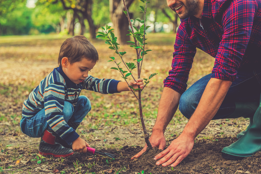 A father and son planting trees in British Columbia to help protect the environment