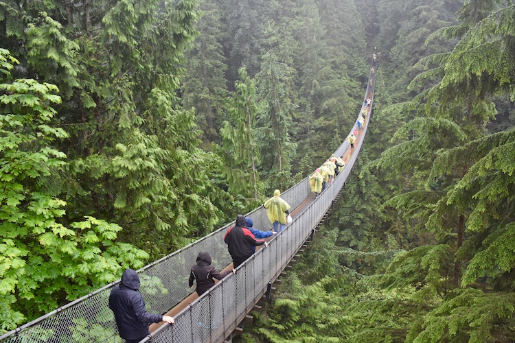 A suspension bridge in Vancouver showcasing local plants